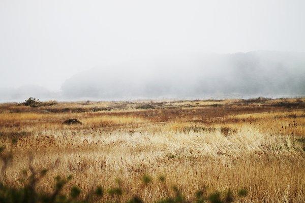 Riverside in the mist