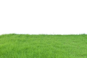 Lush Green Grass field isolated on white background, clipping path inside