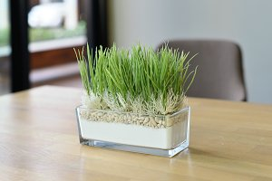 Grass pot on wood table with blurry background