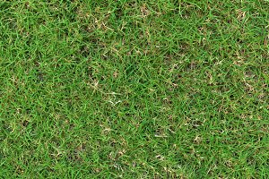 Grass texture. grass background. seamless