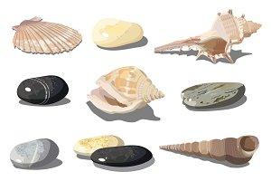 Vector Seashell and sea pebbles