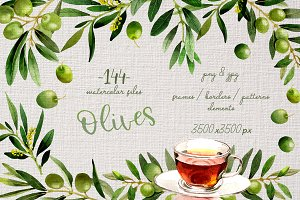 Branches of olive tree PNG set