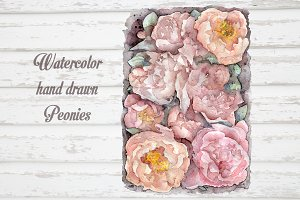 Watercolor peonies hand drawn.