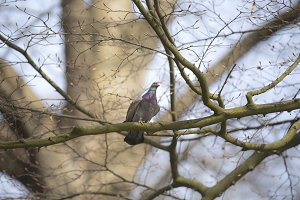 Pigeon on brench