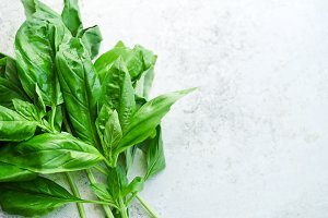 Twigs of fresh green basil