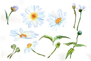 White daisy PNG watercolor set