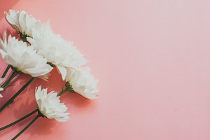 White flowers on a pink background