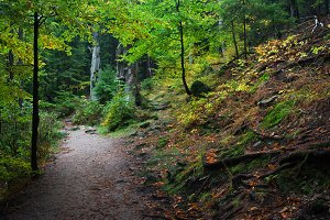 Footpath In Autumn Mountain Forest