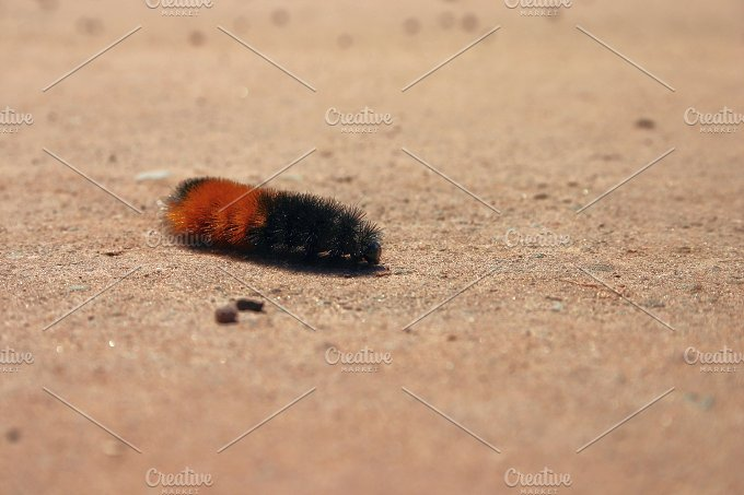 caterpillar.jpg - Animals