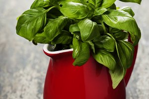 Fresh basil in red jug
