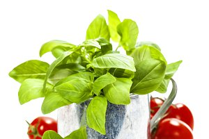 basil in the pot and italian ingred
