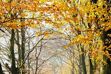 Autumn, fall forest