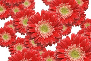 Various Sized and Depth Red Dasies
