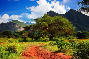 Savanna panorama landscape in Africa
