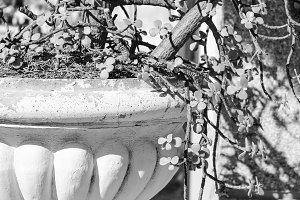 Cactus Plant inBlack and White