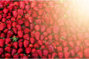 Fresh strawberries background. Copy space. Harvest. Food frame and banner. Sunlight toned