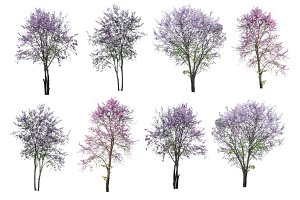 purple tree isolated on white