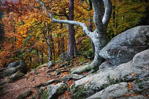 Autumn Mountain Forest Scenery