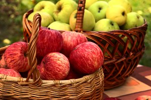 red and yellow apples harvest in basket close up photo