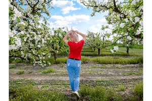 A girl in jeans and a red T-shirt is walking along a blooming apple orchard.