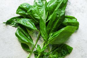 Twigs of fresh green basil
