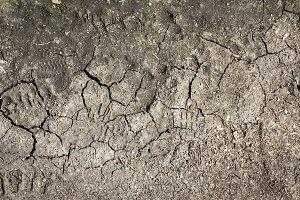 Dry muddy background