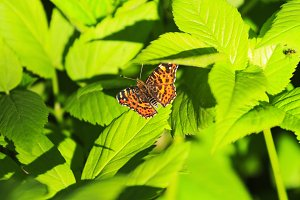 butterfly in the green leaf