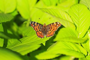 orange butterfly in the green leaf