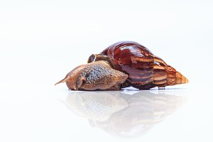 snail cosmetic on white background