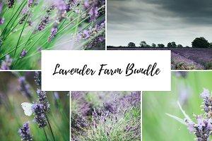 Lavender Farm Photo Bundle