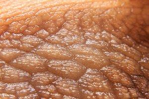 moist snail skin macro