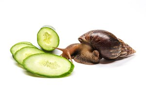 cucumber and snail on a white background