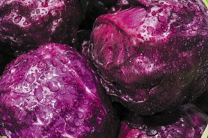 Purple cabbage with water drop