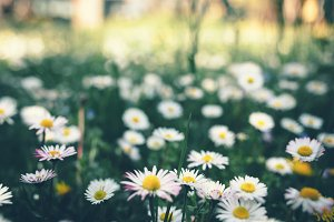 Flowers blooming in the grass