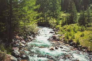 small mountain stream among the pines. Altai Mountains