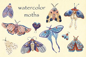 Watercolor moths. PNG, JPEG