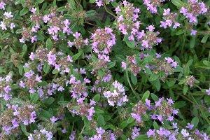 wild flower in spring