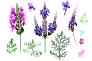 Violet lavender PNG watercolor set