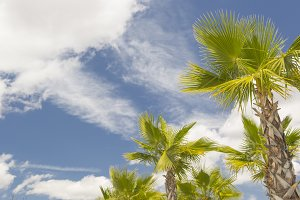 Majestic Tropical Palm Trees
