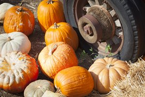 Fresh Fall Pumpkins and Old Tire