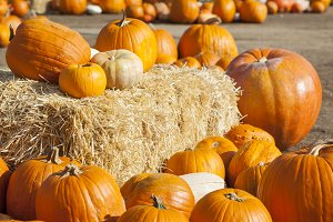 Fresh Orange Pumpkins and Hay Bale