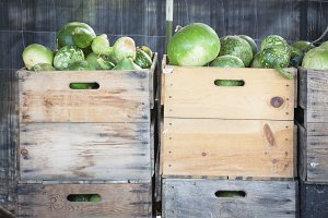 Fresh Fall Green Gourds and Crates