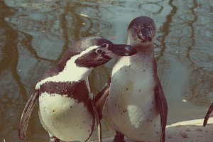 2 Penguins looking funny