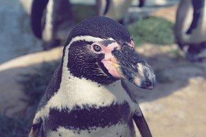 Portrait shot of a Penguin