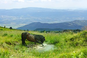Black horse in Carpathian mountains
