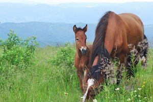 Foal with mother-horse