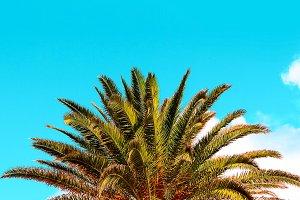 palm tropical vibes. Travel beach fa