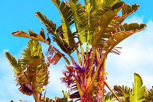 Palms. Tropics. Canary Island