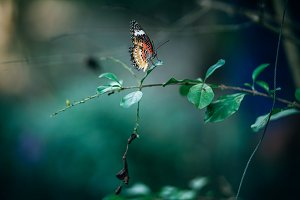 Colorful Warm Colored Butterfly