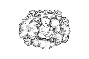 Baby in cabbage engraving vector illustration